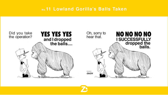 zoo_no11_new