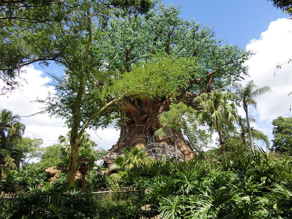 Disney_animal_kingdom04